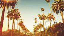 Beverly Hills Sunset Drive