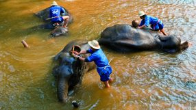 Mahouts wash elephants in a river during the elephant bathing time at Mae Sa Elephant Camp, near Chiang Mai city in Northern Thailand