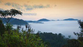 Rwandan rainforest