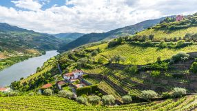 Vineyards and Landscape of the Douro river region in Portugal (iStock)